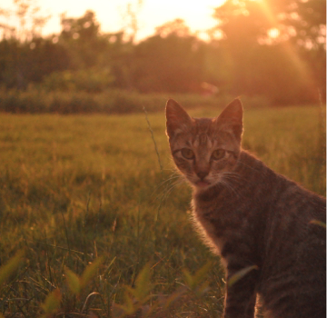 Sunset Cat by lujiao_85